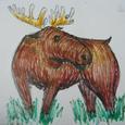 Moose / Elk
